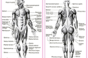 01. Curs anatomie de baza (optional)